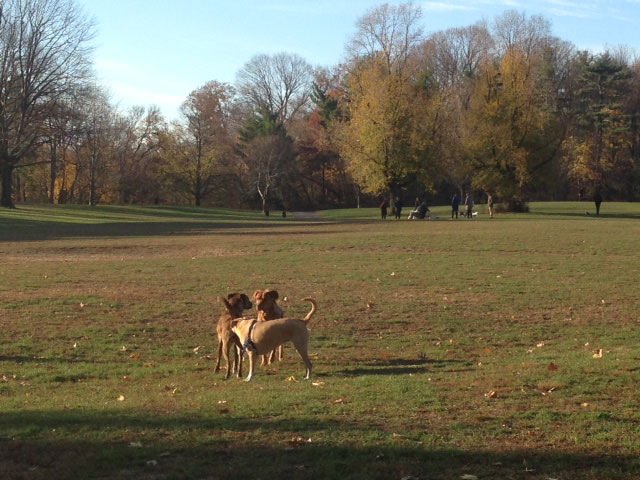 """…We are currently staying near Prospect Park in Brooklyn where they have off-leash hours before 9am, and it is fabulous to see so many dogs running and playing in this beautiful huge park…"""