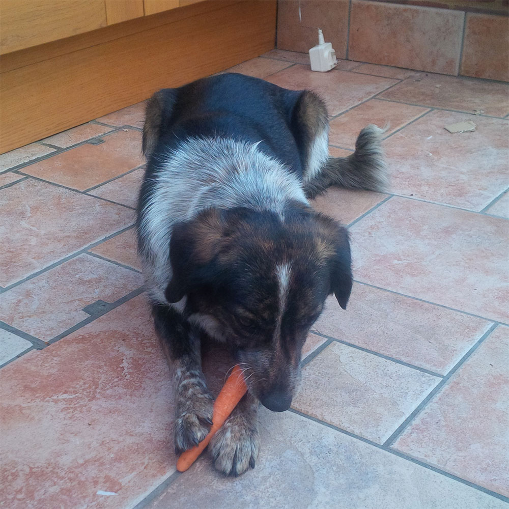 Not only has Bonnie learned to love carrots, she even likes to poke her nose in the fridge to choose her own — just like Billywhizz used to!
