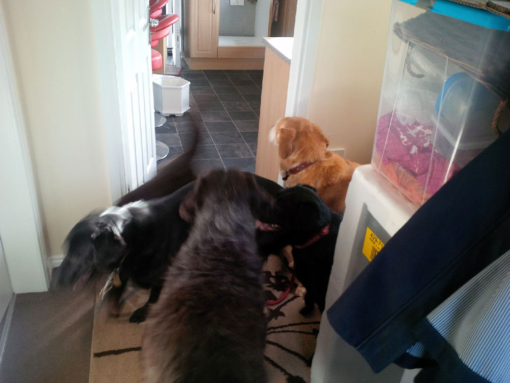 There was a certain amount of controlled chaos as the dogs got ready to leave!