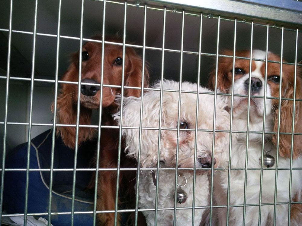 Sasha, Cara and King Charles Spaniel Lola are sharing a bedroom
