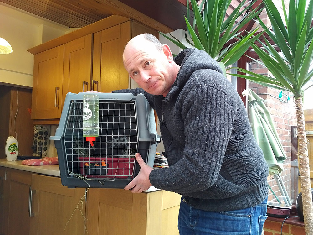 Boris the rabbit with Animal Courier Dave