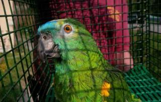 Brilliantly coloured Coco