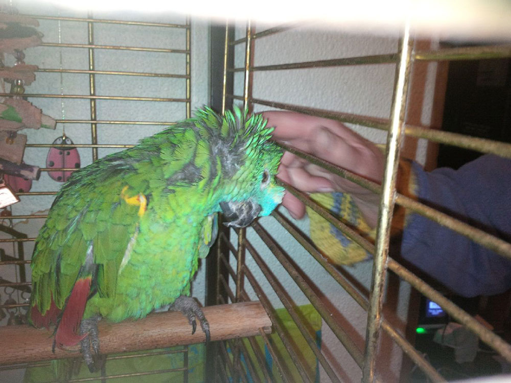 As Karen approached Coco's cage, he put his head down to be stroked