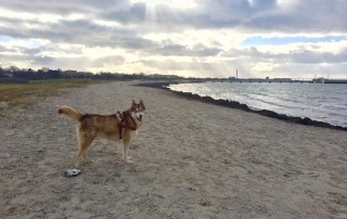 Oskar on Ribersborg beach. Laura says he loves the sand!