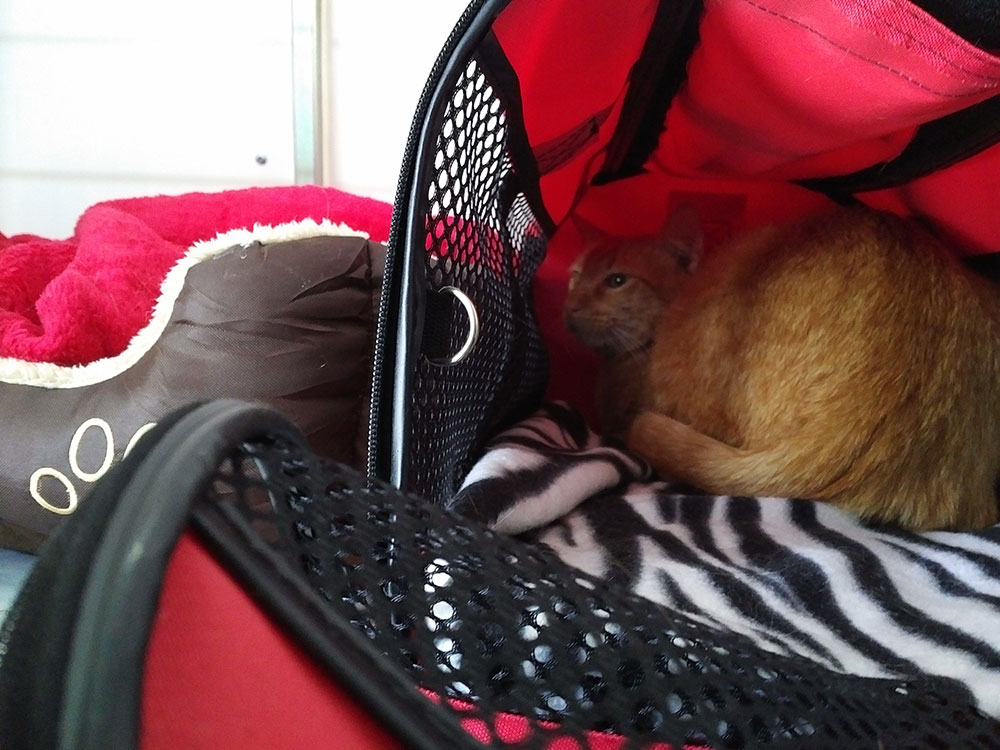 Ginger snug as a bug in a rug, with his own travel bag and bed