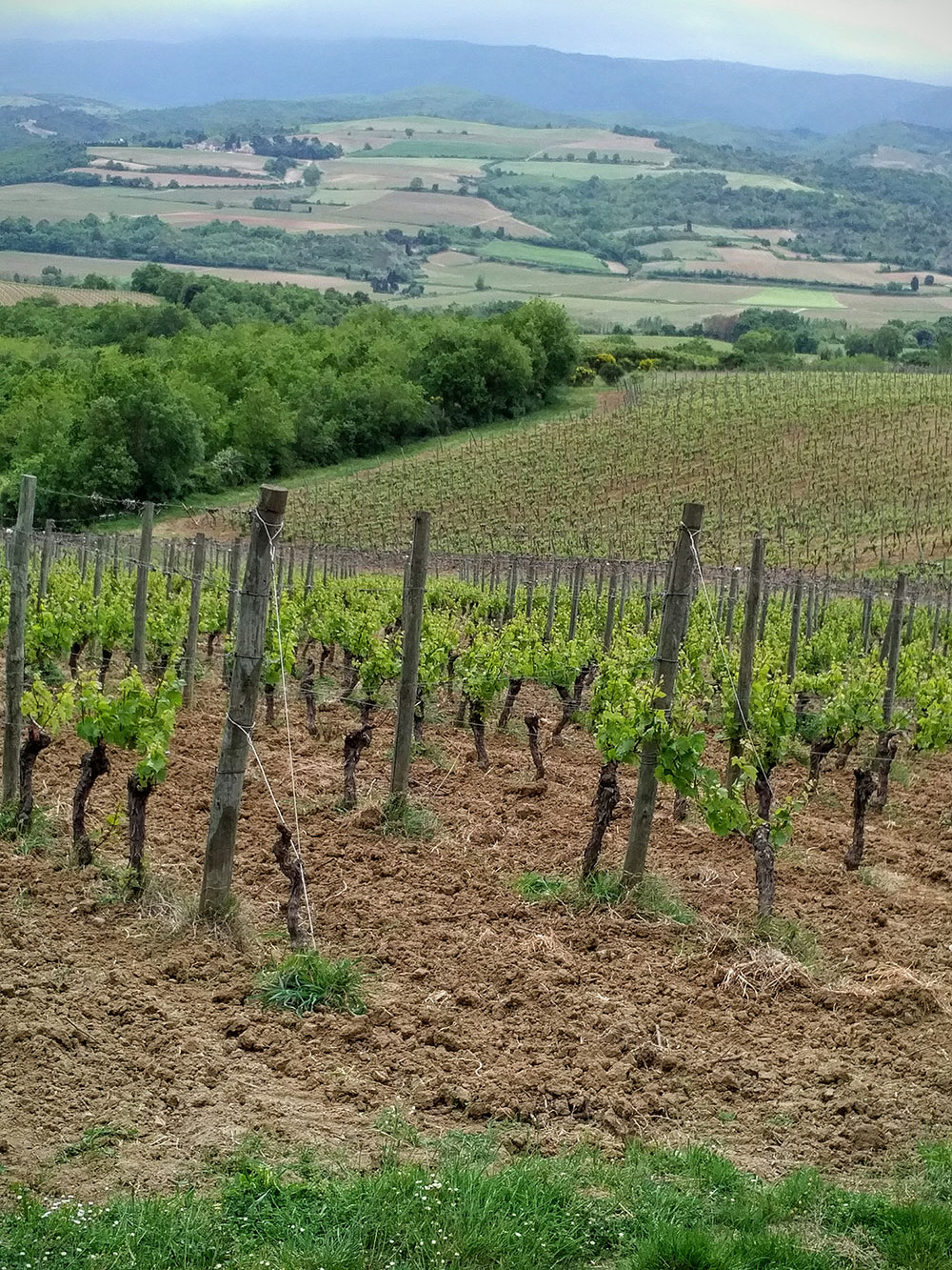 Even on a rather bleak afternoon, the views over the vineyards at this organic domaine are stunning, France