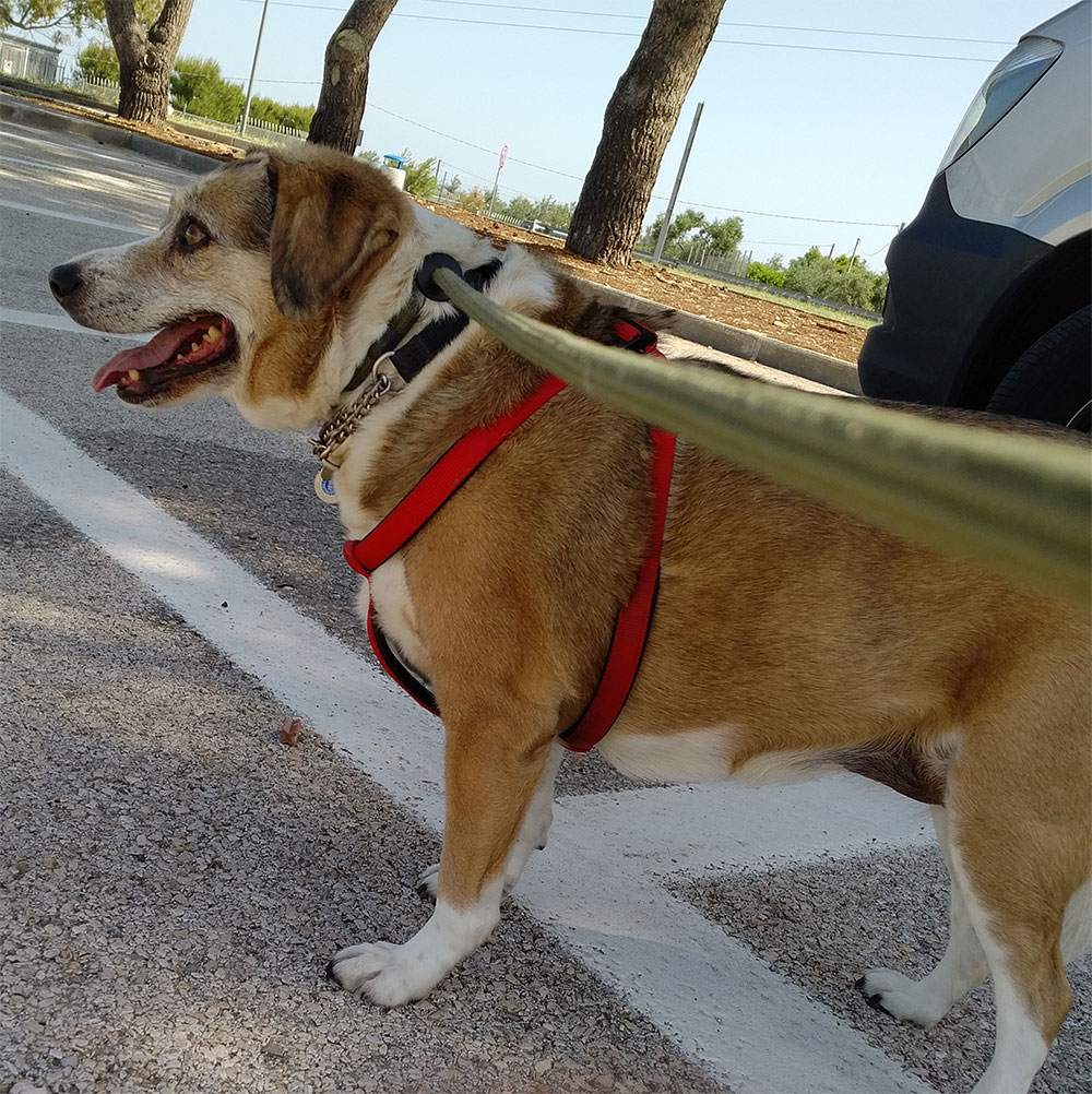 Kookie out walking, checking the passing cars for her family. Don't worry Kookie, not long now til you're reunited with Sara!