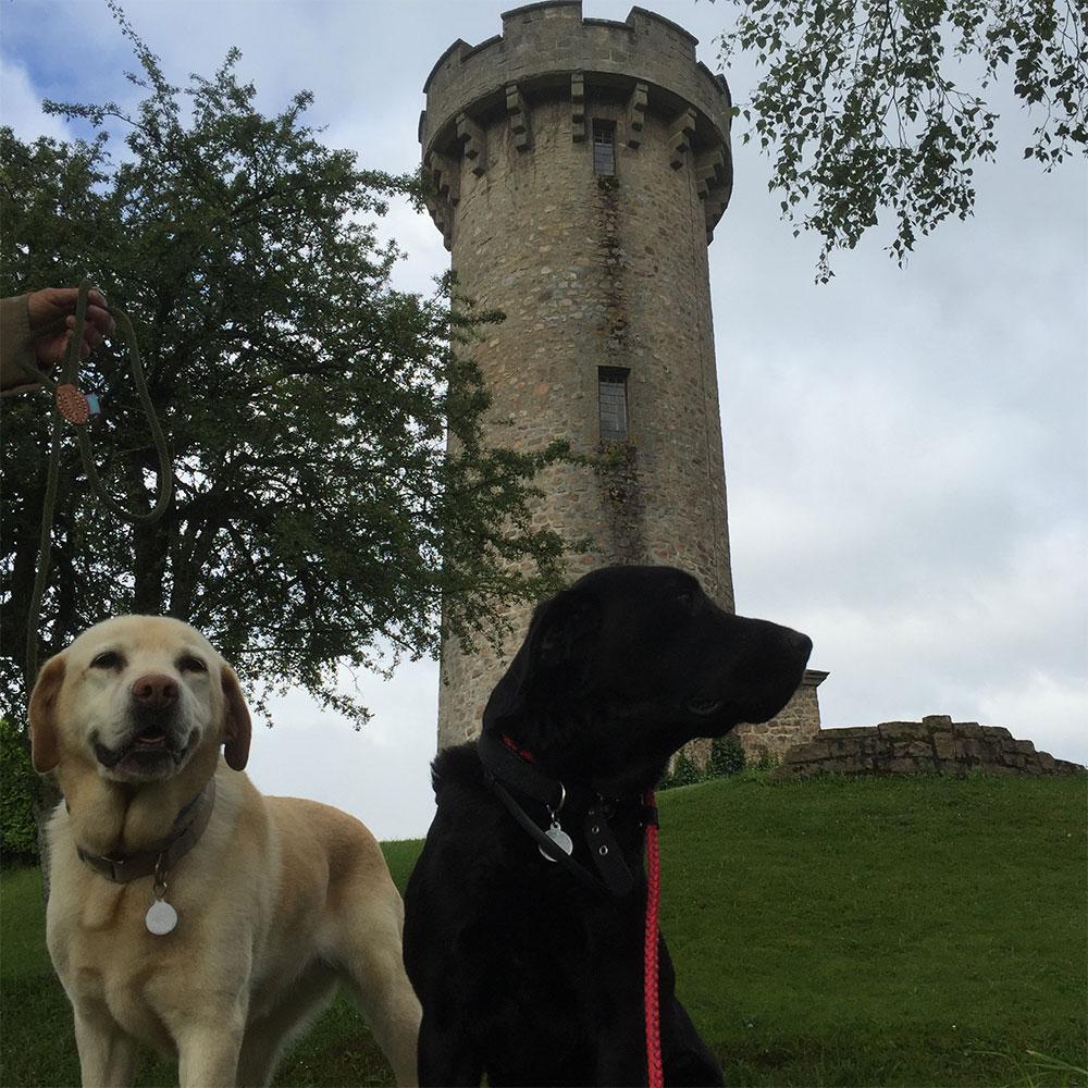 Cisco and Rafi enjoying stunning surroundings on this morning's walk