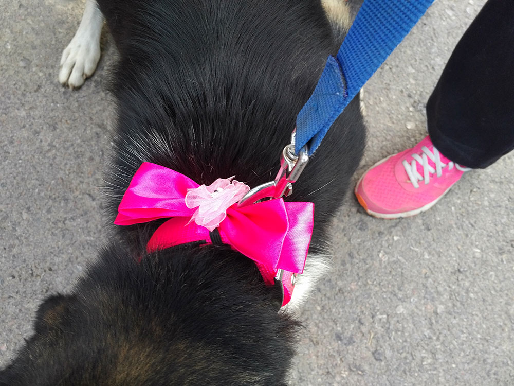 We would be thinking Martha had slipped up if a Filozoikos dog didn't check in with a special farewell bow on its collar!