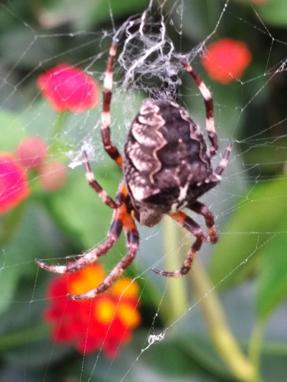Super spider