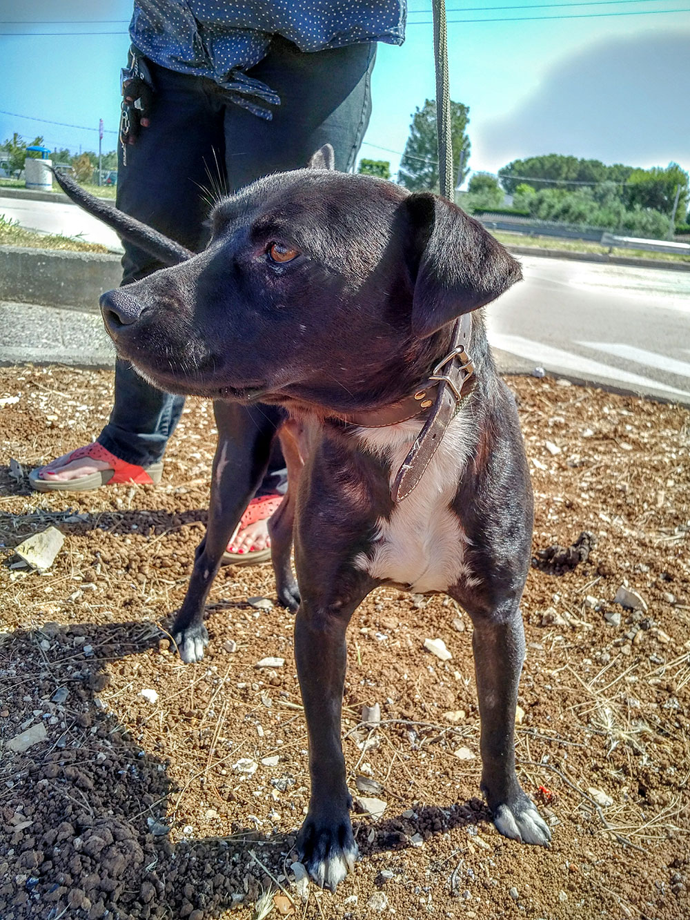 Handsome Blackie has been adopted by Natalya and Wayne and is on his way to them in Edinburgh. They adopted another dog from Lesvos last year, who also travelled with us.