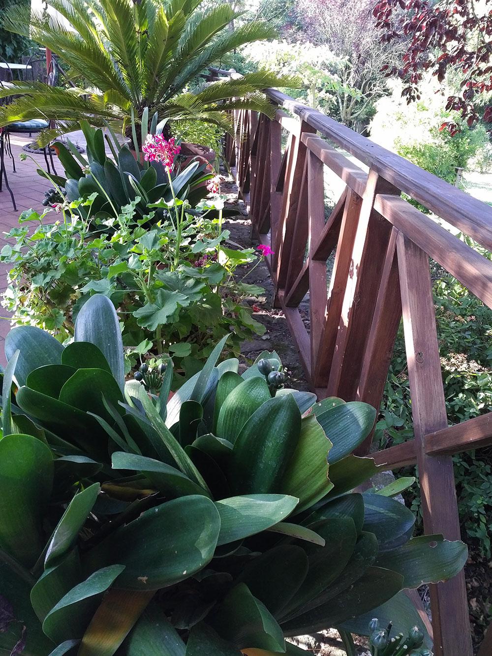 Wonderful green and leafy gardens