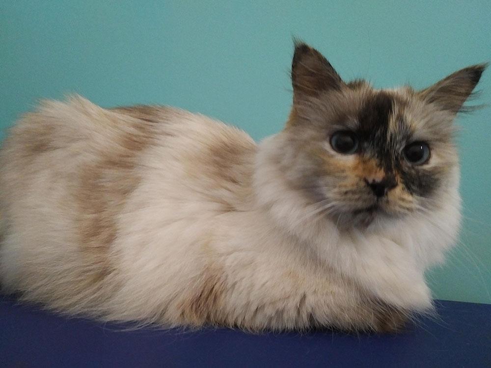 Super fluffy Matilda