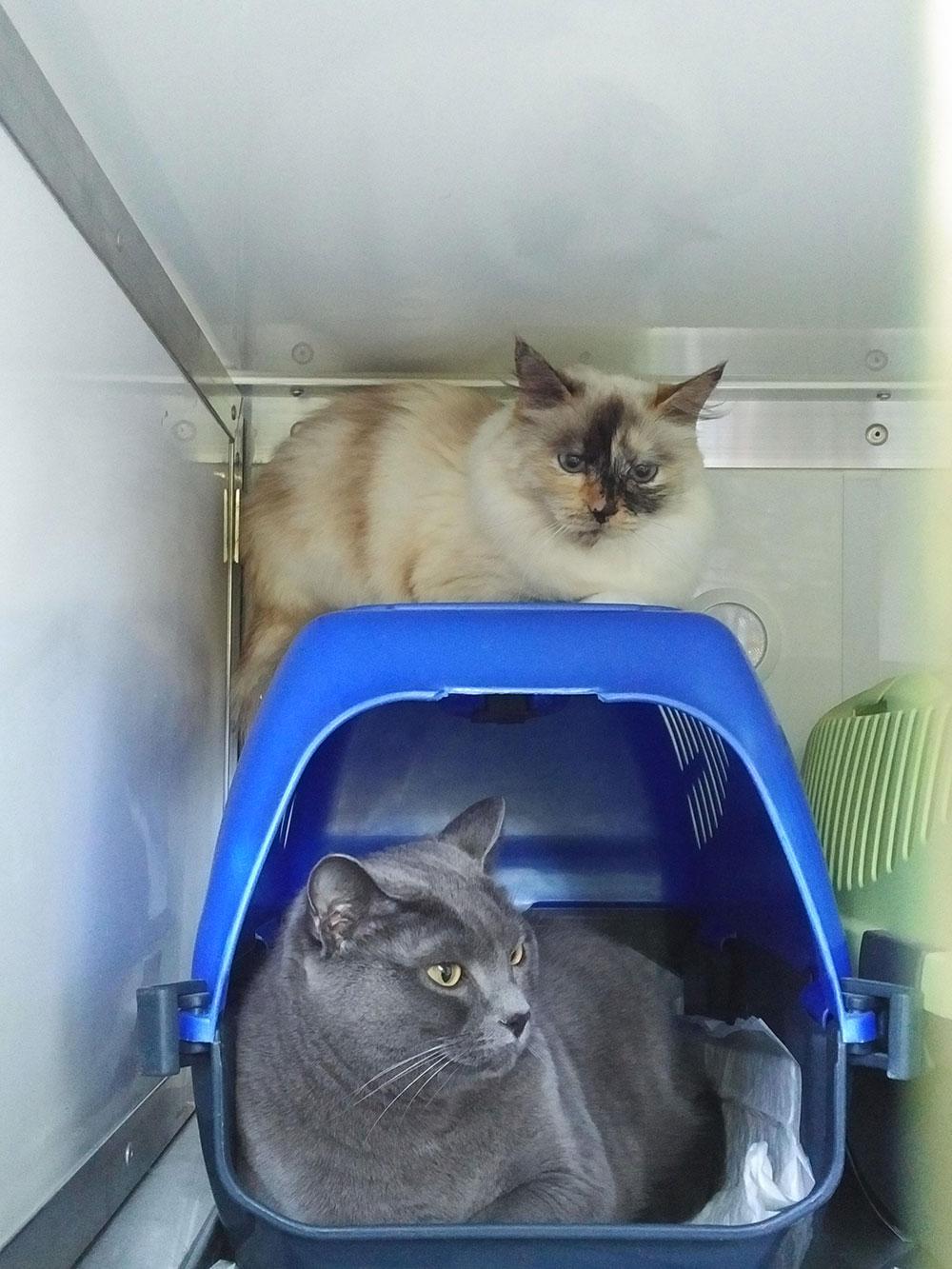 Double-decker kitties!