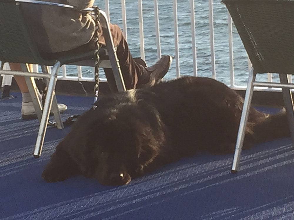 This handsome hound has obviously crossed on the Puttgarten ferry before!