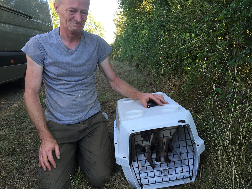 A very happy reunion — the cats are sure to enjoy their new life in rural France