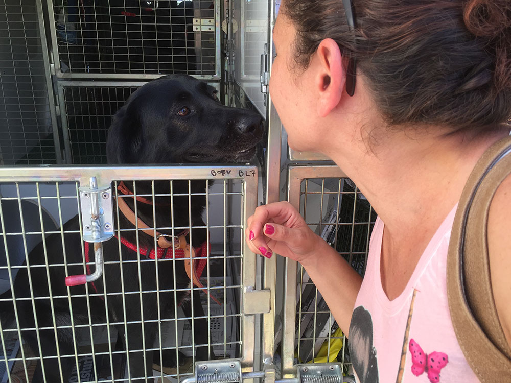 Labrador Liza got on board in Faro. She's travelling with us to Felixstowe where the family is relocating, Mum Vera, a firefighter, came to see her off.