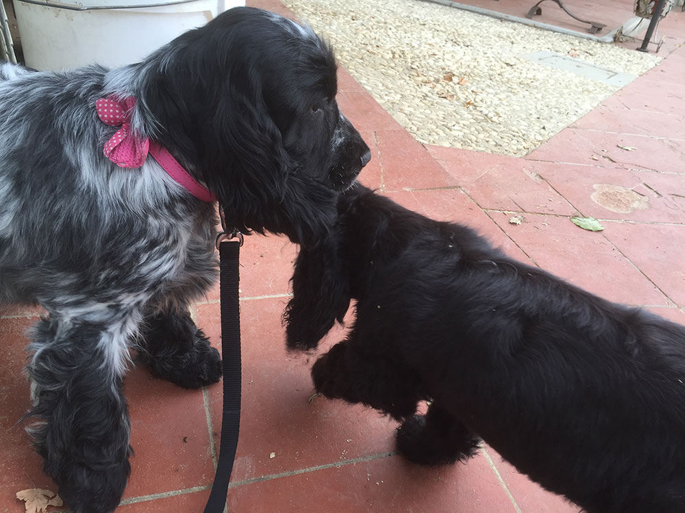 Betsy meeting her new playmate