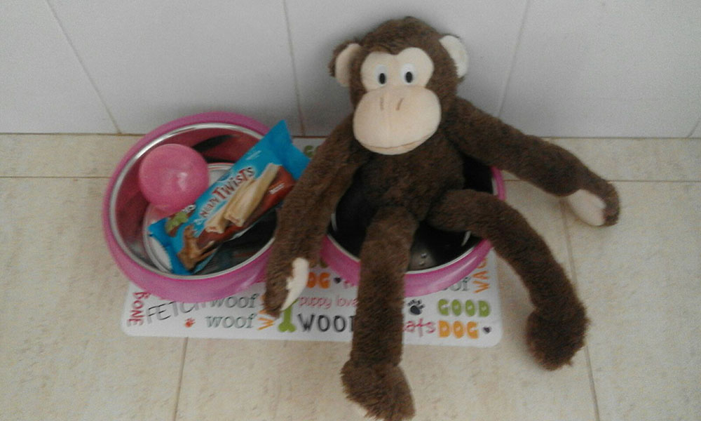 Eleanor sent us this photo of the toys and treats that were waiting for Mia at her new home