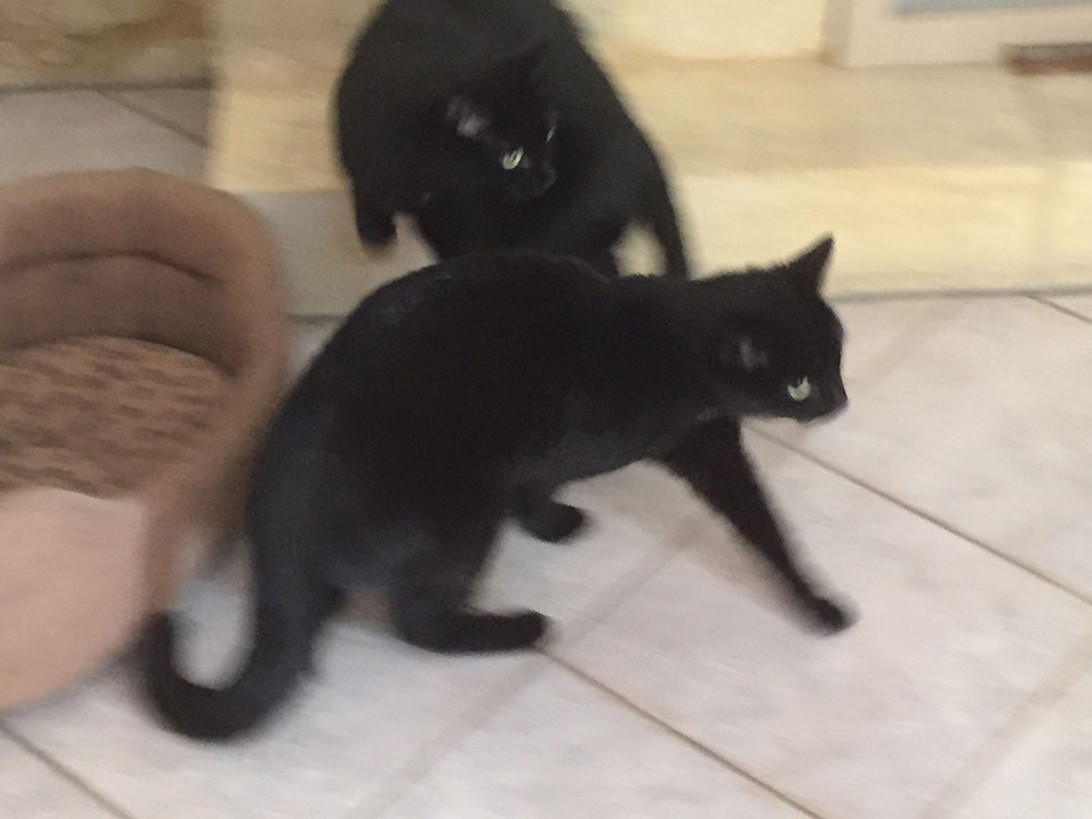 Cleo and Bandit are a blur of fur!