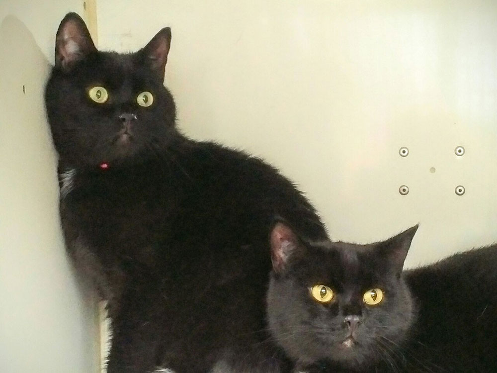Beautiful jet-black bookends, Billy and Beau, watching all the comings and goings around our van
