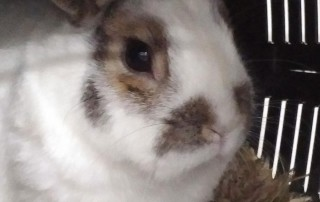 bunny passenger Spots