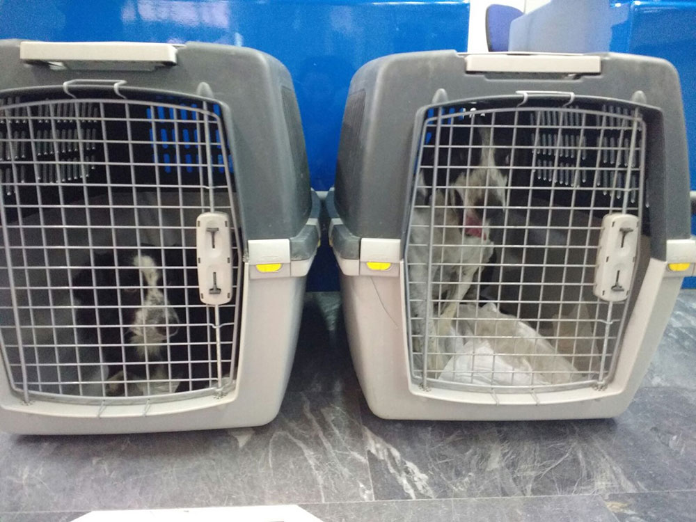 Wilson and Derek ready for take-off from Lesvos