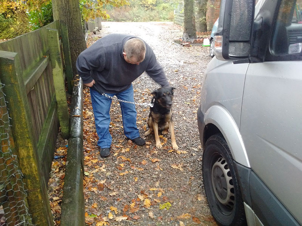 Merlot, a Belgian Malinois, was found on the streets of Palma and brought to the UK via GSD Rescue