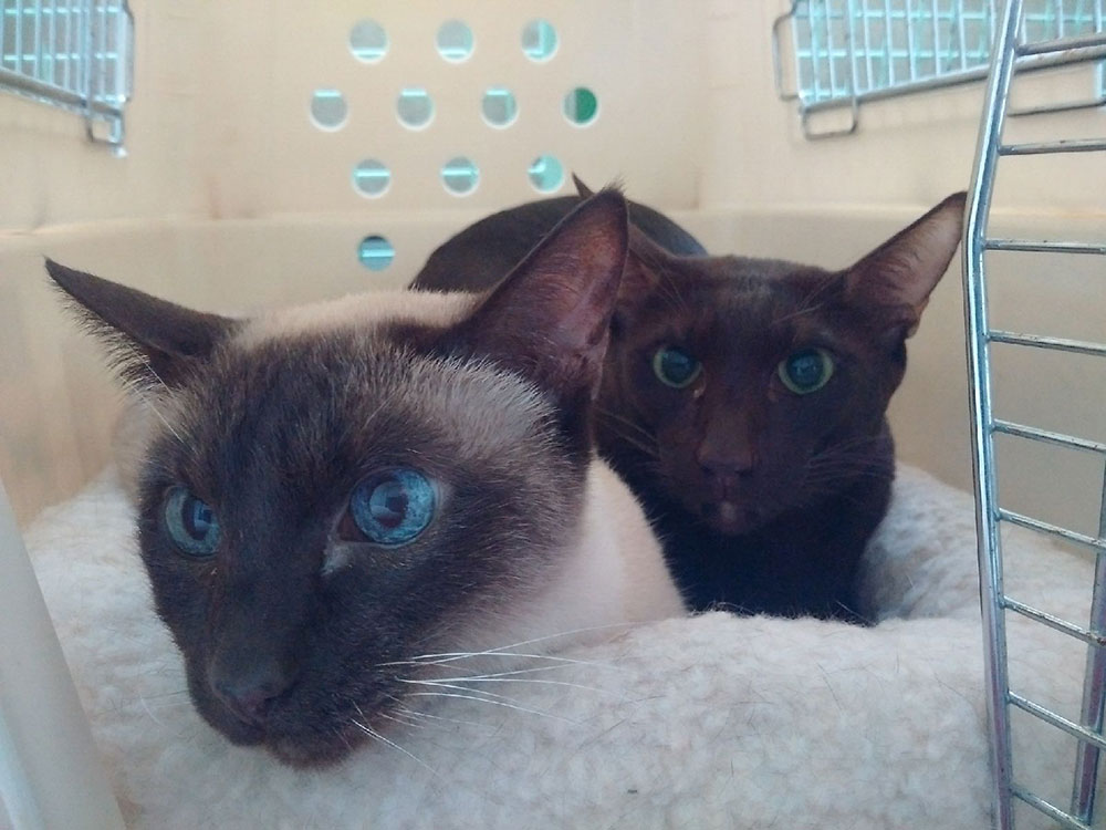 Despite the option of a pod each, Polly (L) and Charley (R) preferred to snuggle up!