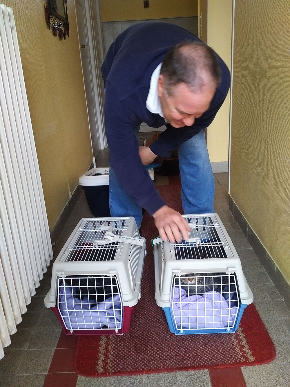 reunions in France — A warm welcome for cats Sam and Evie at their new home in the Dordogne