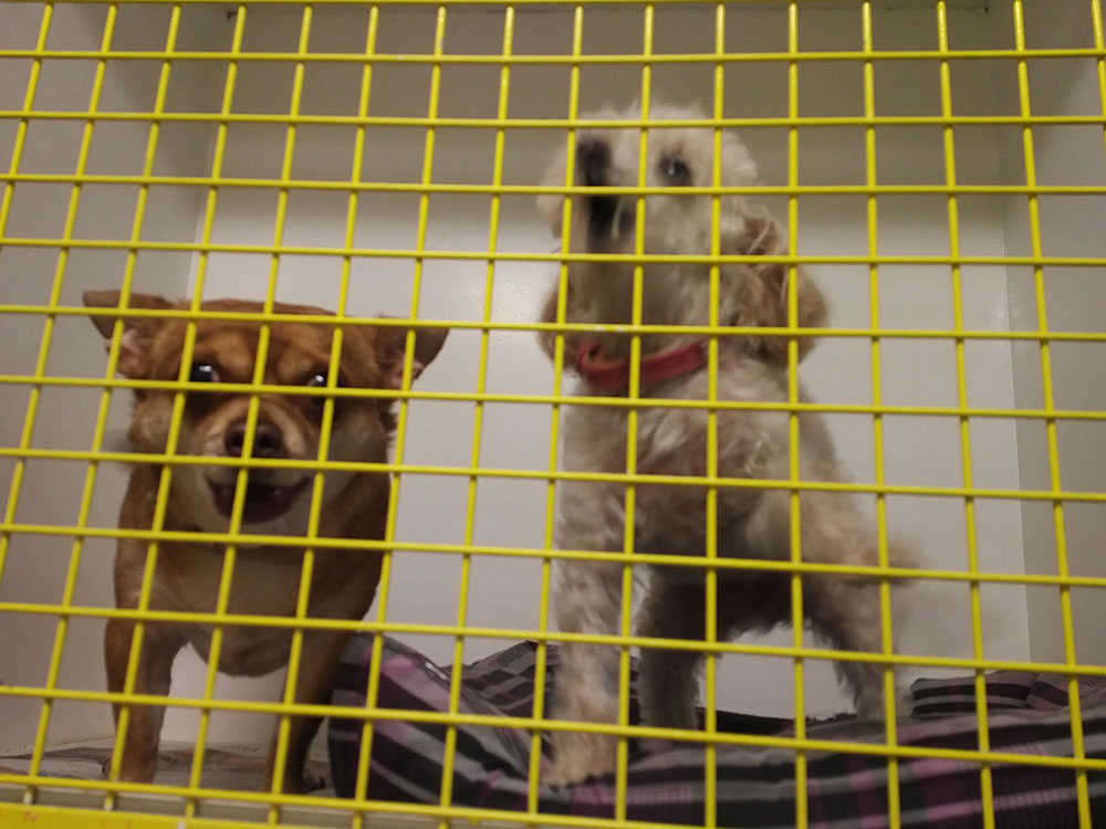We had a lovely crossing with Miinoan — here are Bruiser and Peaches singing their praises from their onboard kennel