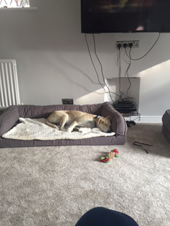 Freddie has a lovely bed of his own…