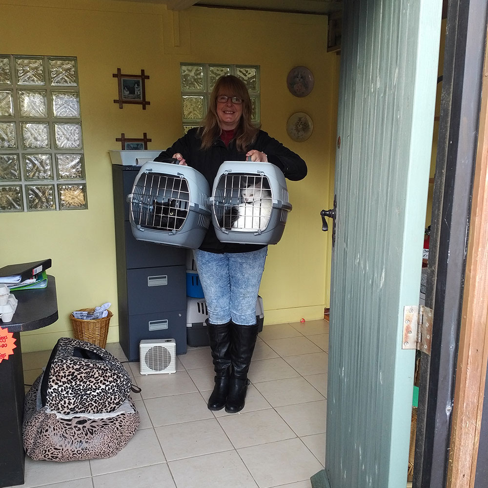 We collected the cats from Lois at West End Cattery in Dover