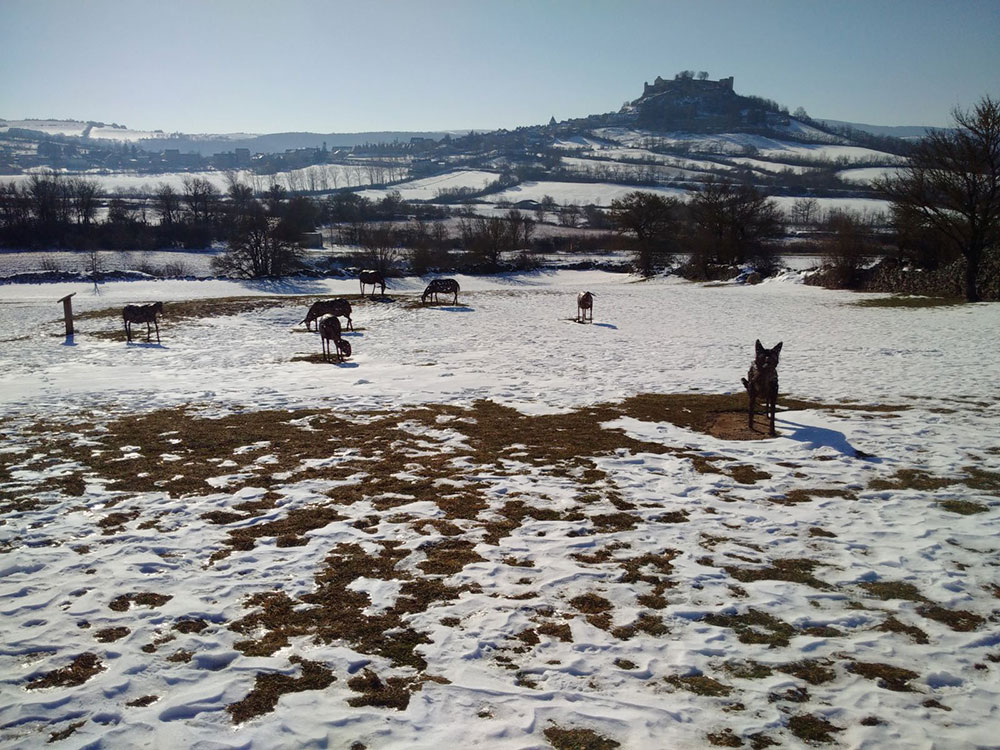 Sheep and sheepdog statues spotted in the wintry landscapes along the way