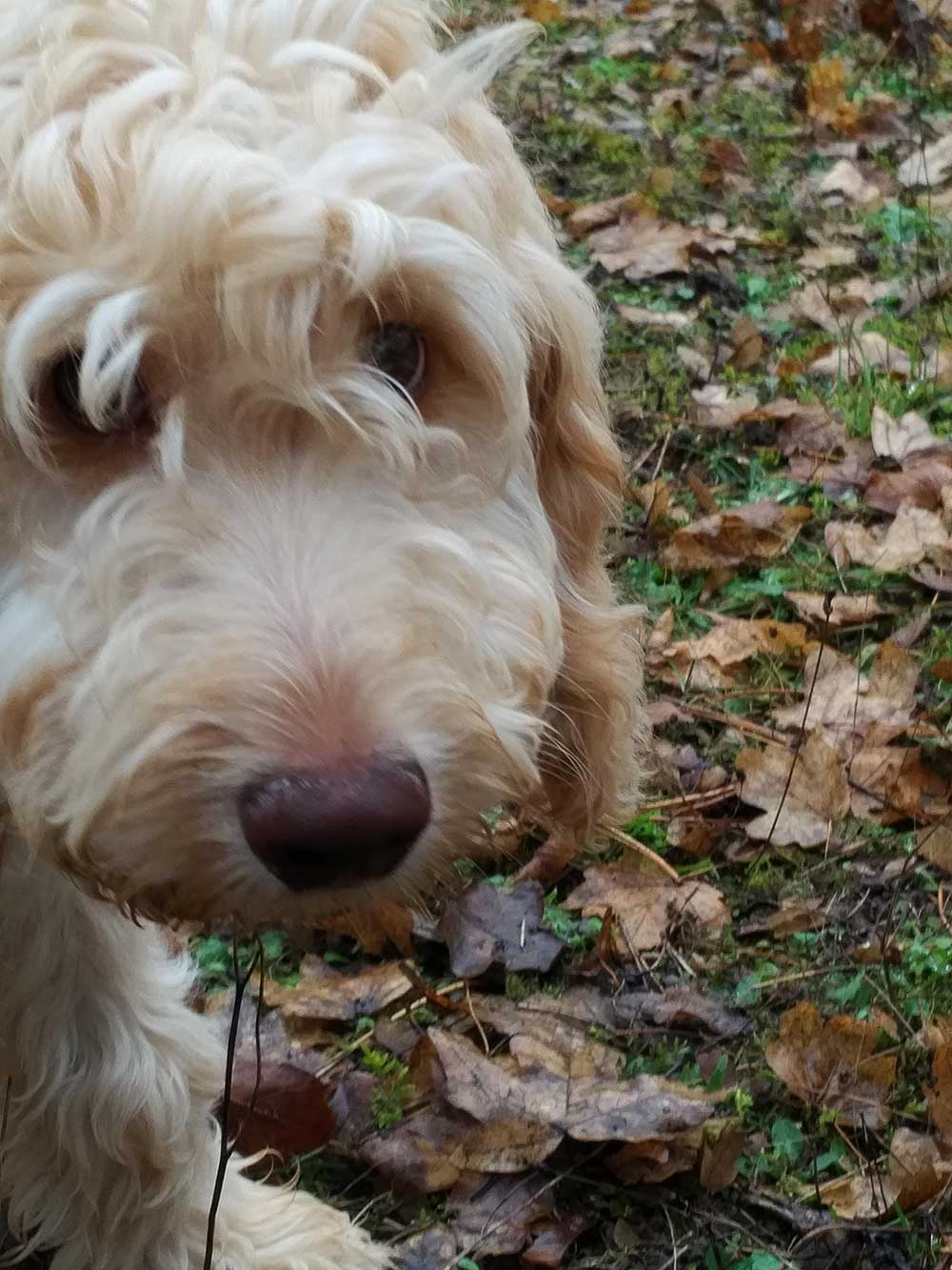 Bobby's irresistible puppy face — no wonder Julie was so excited about his imminent arrival