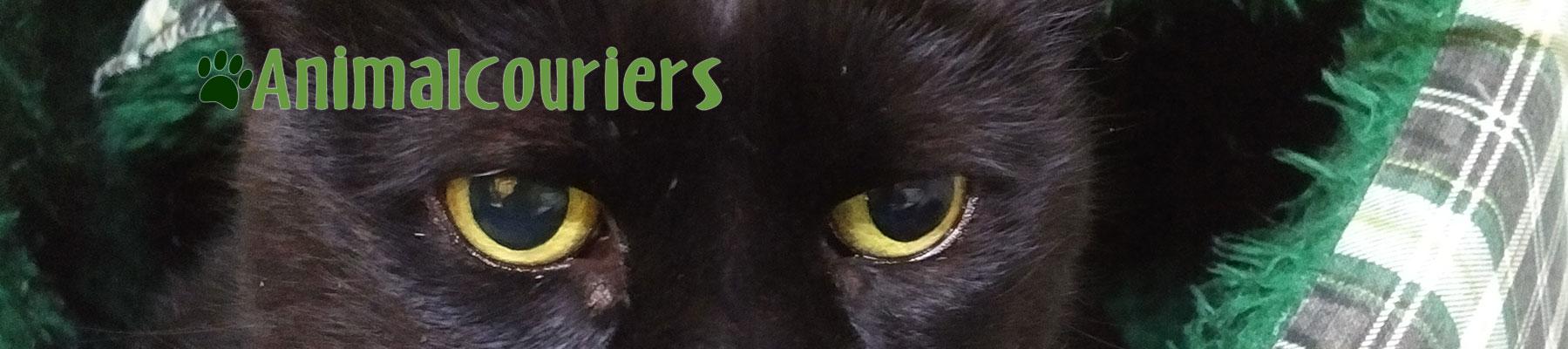 Back cat eyes