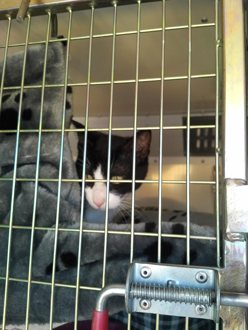 """As the four officers peered into our van, clever Oberon popped his head out of his hammock. """"Bello gato!"""" chorused the officials. Then they saw Sunny and all of the dogs. """"Belli belli!"""" came the unanimous verdict. Proof, if ever it was needed, of the power of cute!"""