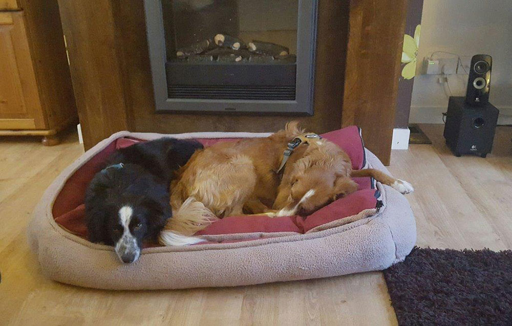 …and tucked up together (Sam had to buy a special big bed for them to share)