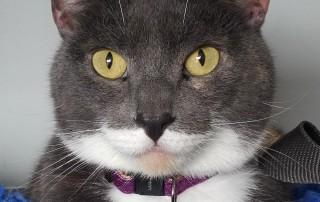 Gorgeous puss Bella