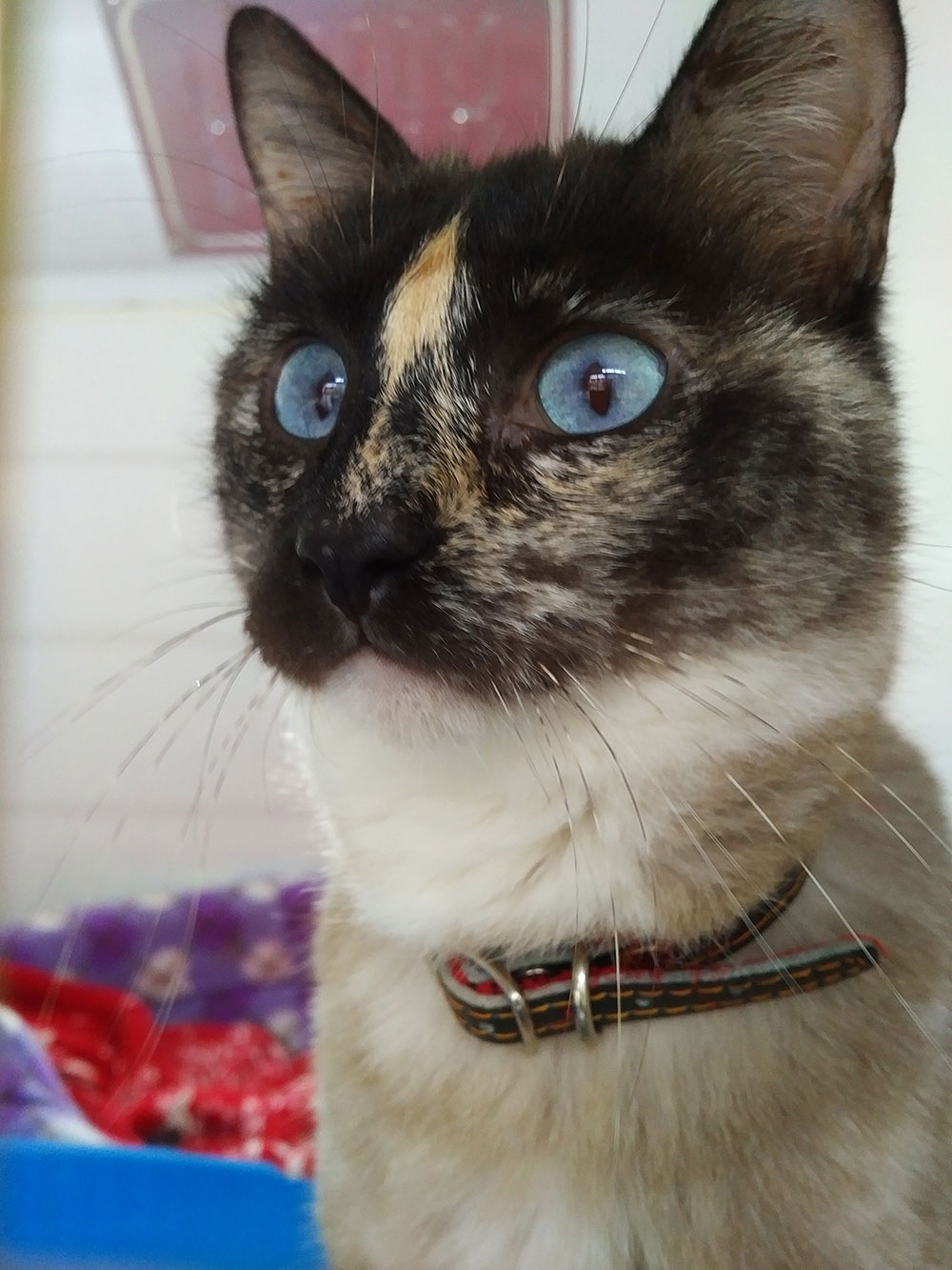 Teresa's markings are simply beautiful — we can see why Simonetta fell for her!