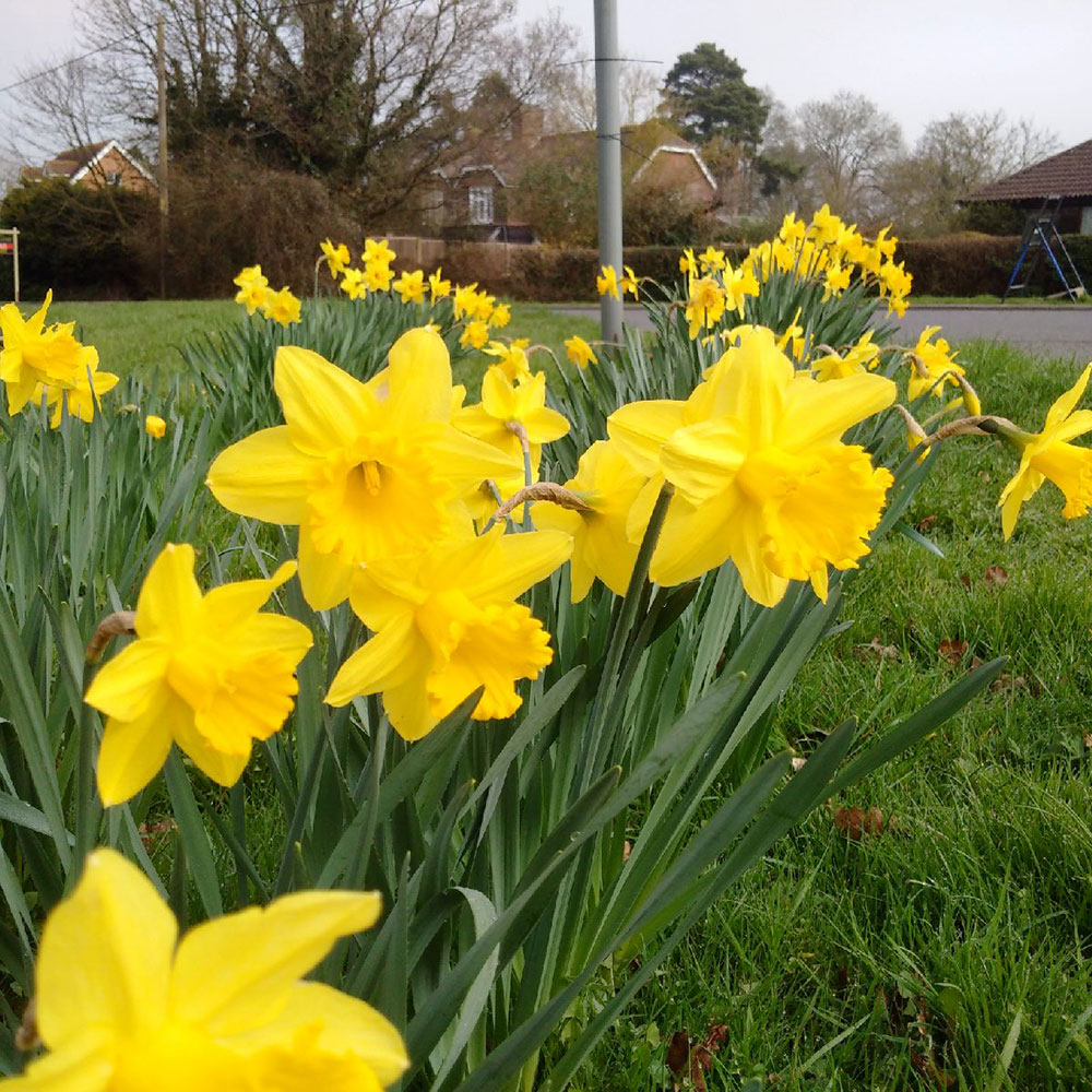 Spring was definitely in the air, judging from the fine display of daffodils spotted along the way
