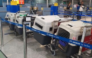 Travel boxes assembled, dogs walked, fed and watered, and all checked in at Athens airport
