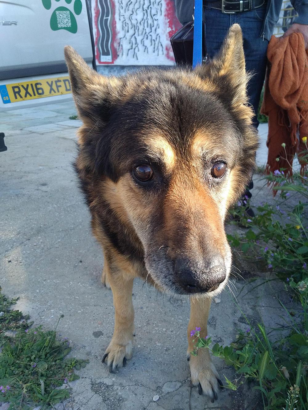 Handsome hound Jeff