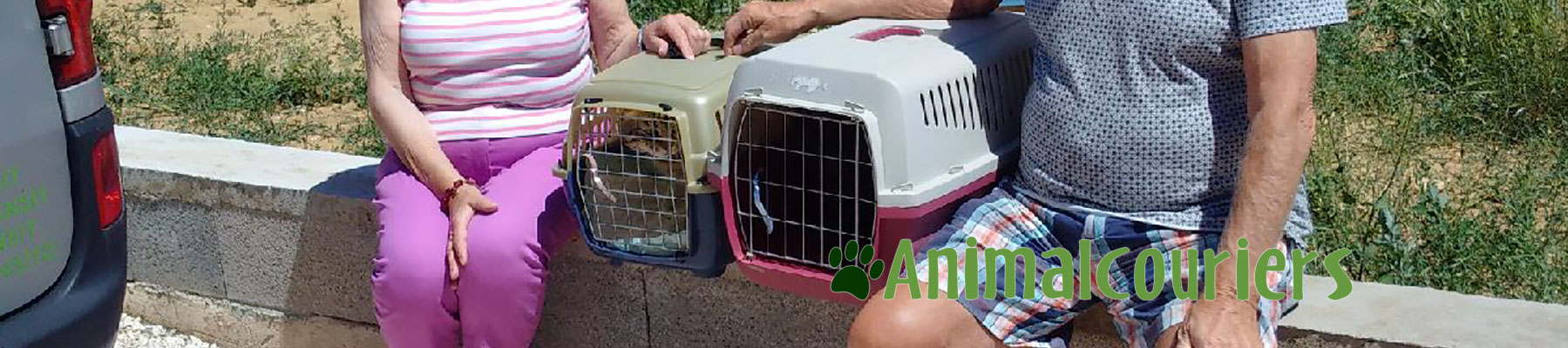 transporting cats from France