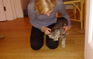 Transporting cats from France: head rubs from Grizzly as Jane welcomes him home