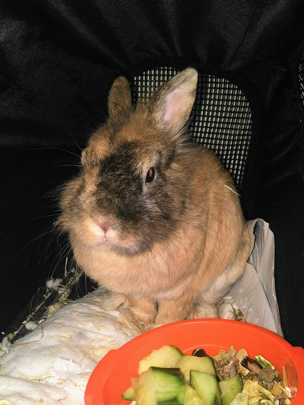 Rabbit Samson, who belongs to Anna, seems to be enjoying the cruise.