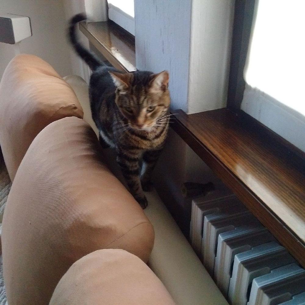 Maxi exploring his new Italian home…