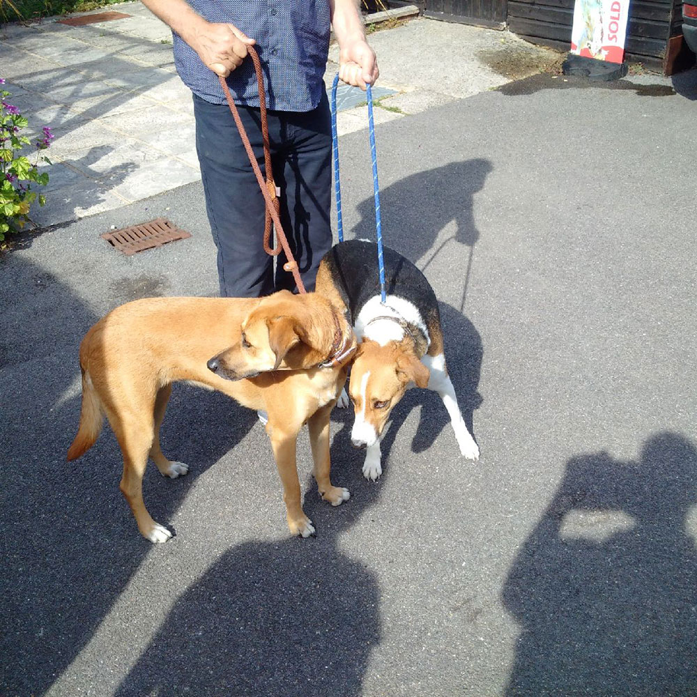 Raja and Bingo on arrival at their overnight kennels, along with…