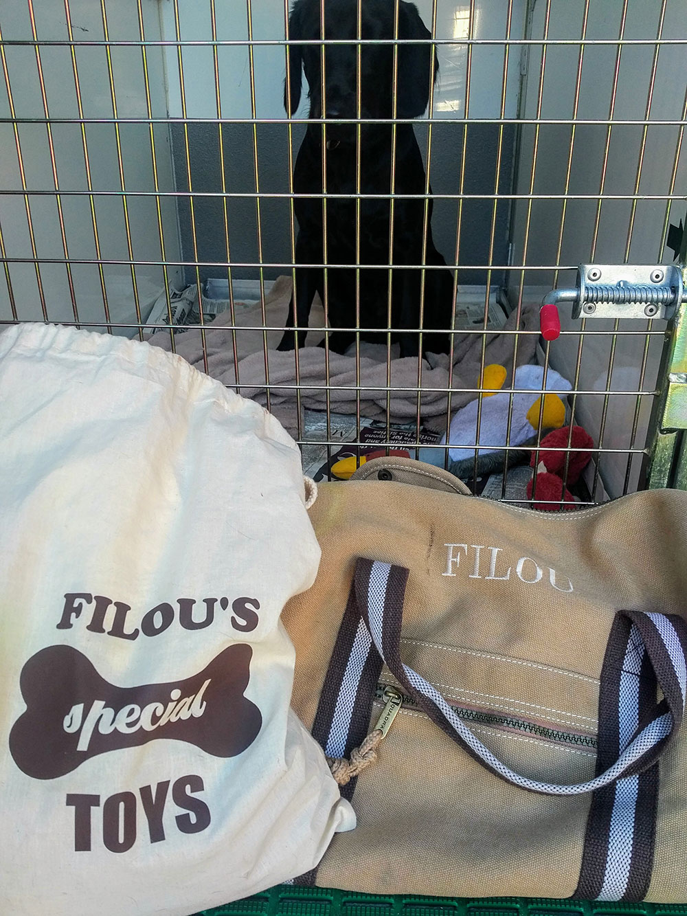 Filou in his bedroom, with his neatly labelled travel gear
