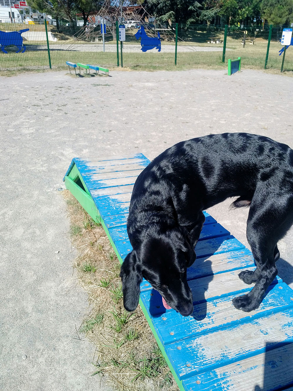 Filou enjoyed a good romp around in the doggy play park when we stopped at the Montelimar aire for nougat (natch) and melons